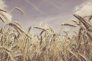 IMU agricola, i contenuti del decreto