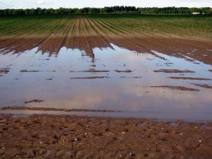 """AGRICOLTURA, MORETTO (IV): """"VIA LIBERA AGLI AIUTI PER LE IMPRESE AGRICOLE VENETE DANNEGGIATE DAL MALTEMPO DEL 2019. SOSTEGNO CONCRETO AL SETTORE"""""""