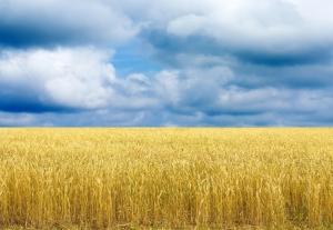 Non si escluda il V.O. dai fondi europei per lo sviluppo rurale