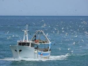 """Pesca, Moretto (Iv): """"Pieno sostegno allo stato di agitazione del 12 giugno a Venezia"""""""